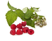 Raspberry and a branch — Stock Photo