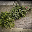 Two Christmas trees on the pavement - 图库照片
