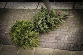 舗装の上の 2 つのクリスマス ツリー — ストック写真