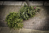Two Christmas trees on the pavement — Stock Photo