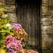 Antique wooden door and hortensia — Stock Photo