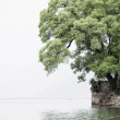 Tree next to a lake — Foto de Stock
