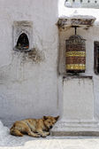 Prayer wheel and dog sleeping at Bothnath stupa in Kathmandu — Stock Photo