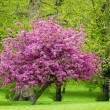 Stock Photo: Pink tree