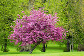 Pink tree — Stock Photo