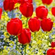 Red tulips — Stock Photo #38051267