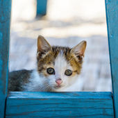 Kitten hidding behind a chair — Stock Photo