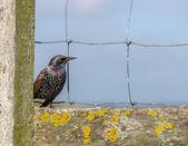 Bird on a fence — Stock Photo