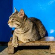 Stock Photo: Cat basking in sun
