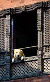Dog looking out of a window — Stock Photo