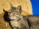 Cat basking in the sun — Stock Photo