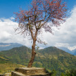 Single tree in Nepal — Stock Photo