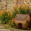 Basket and orange flowers — Stock Photo