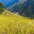 Black millet field in Nepal — Stock Photo