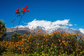 The Annapurna South and the Hiunchuli — Stock Photo