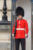 Royal guard at Buckingham Palace — Stock Photo