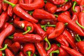 Espelette peppers — Stock Photo