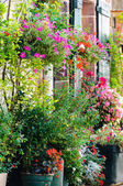 Flowers outside a house — Stock Photo