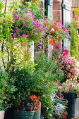 Flowers outside a house — Stock fotografie
