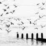Seagulls flying — Stock Photo #46387963