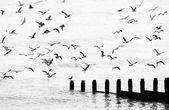 Seagulls flying — Stock Photo