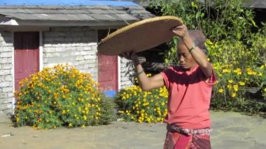 Nepalese woman sifting cereal grains — Stock Video