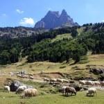 Brebis sur fond du Pic du Midi d'Ossau — Stock Photo #12473003