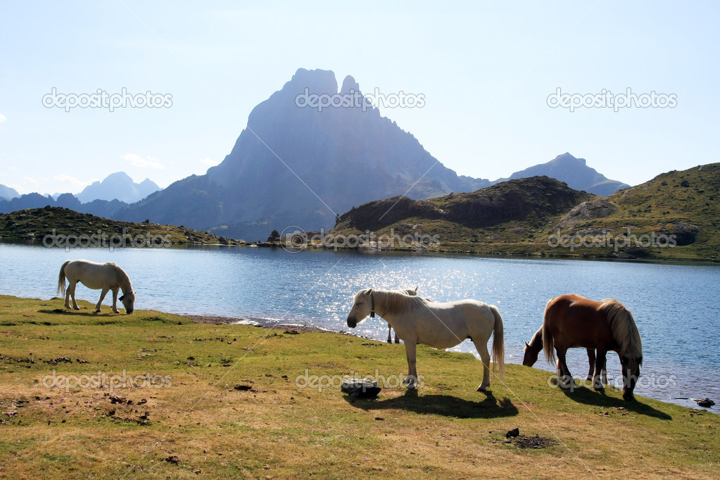 Chevaux sur fond du Pic du Midi d'Ossau — Stock Photo #12480261