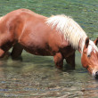 Horse on the water — Stock Photo
