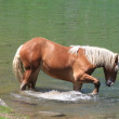 Horse on the water — Stock Photo #27822913
