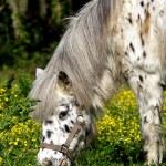 White pony — Stock Photo #44883071