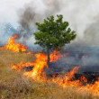 Fire in the woods on a hot summer day. — Stock Photo #12056692