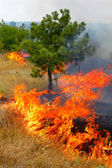 Fire in the woods on a hot summer day. Drought. — Stock Photo
