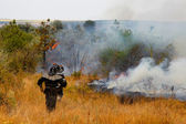 Firefighters extinguish a fire in the woods on a hot day — Stock Photo