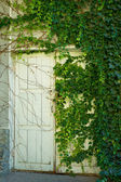 Dilapidated door in the thickets of climbing plants — Stock Photo