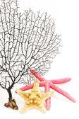Silueta de marrón rama de coral y estrella de mar — Foto de Stock