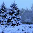 Winter landscape, spruce in a snowy park. — Stock Photo
