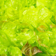 Fresh green lettuce leaves, background macro — Stock Photo