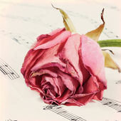 Vintage grunge background with rose and music notes. — Stock Photo