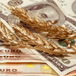 Golden ears of wheat in dollars and euro banknotes — Stock Photo