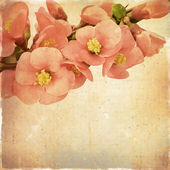 Vintage floral background with pink flowers on a brown backgroun — Stock Photo