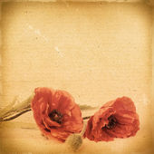 Vintage floral background with poppy flowers on a brown backgrou — Stock Photo