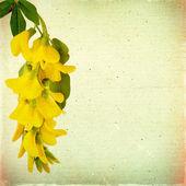 Vintage blumen hintergrund mit gelben akazie blumen auf einem braun — Stockfoto