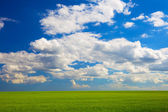 Beautiful landscape. green field and clouds — Stock Photo