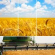 Stock Photo: Set of pictures of harvesting wheat