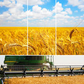 A set of pictures of harvesting wheat — Stock Photo