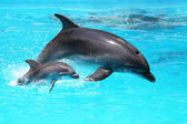 Dolphin with a baby floating in the water — Stock Photo