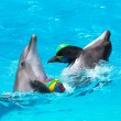 Two dolphins playing in the blue water with balls — Stockfoto