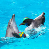 Two dolphins playing in the blue water with balls — Stock Photo