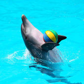 Dolphins playing in the blue water with balls — Stock Photo